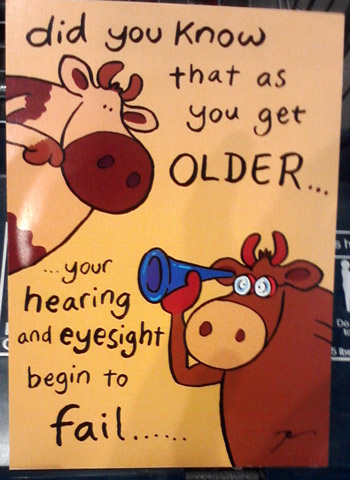 Funny birthday card with cows