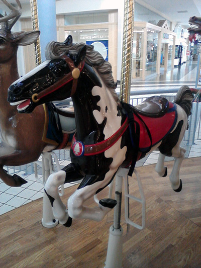 Paint horse that looks like a dairy cow