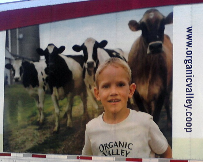 Organic Valley truck - close-up of the dairy cows
