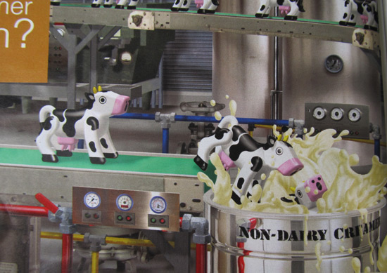 Close-up of the cows in the new La Crème ad