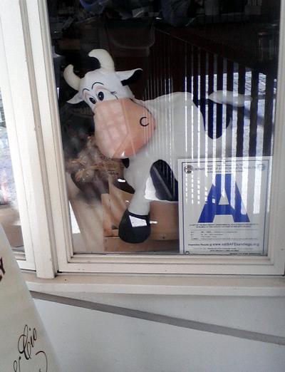 Stuffed cow in a cheese shop window