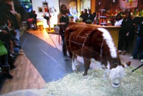 Daily cow on Jamie Oliver's Food Revolution ABC show