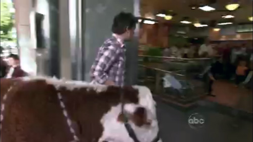 Jamie Oliver Food Revolution ABC show - Oliver walks a cow