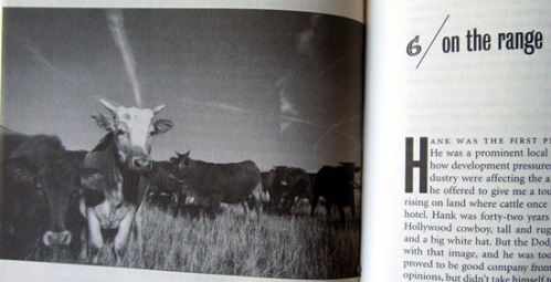 Cow cattle photo in Fast Food Nation book
