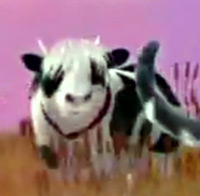 Cow with Justin Bieber haircut in Friskies commercial
