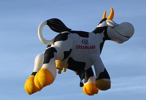 Cow hot air balloon at Albuquerque's balloon fiesta 2011