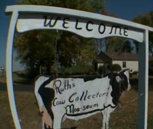 Cow moo-seum in Lafayette, Minnesota
