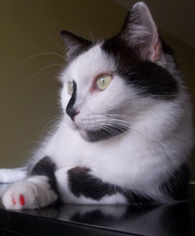 Pedro the cat