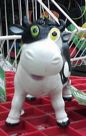 Cow with heterochromia iridium