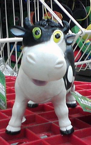 Cow with heterochromia iridium