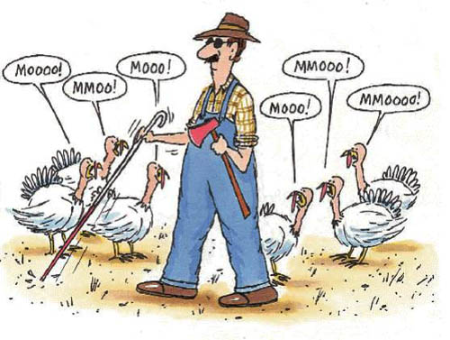 Thanksgiving turkeys moo for the blind man