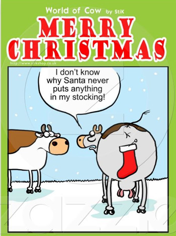 Christmas cards with cows - Stick's World of Cow - Christmas stocking