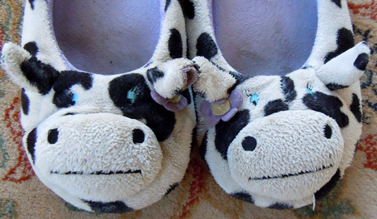 More cow slippers with blue eyes