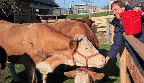 Yvonne the cow will star in a Hollywood movie
