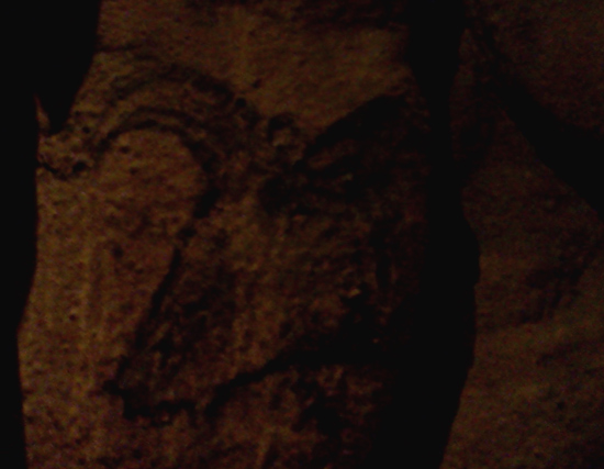 Auroch cow cave painting at the San Diego Museum of Man