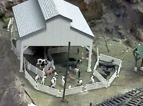 Lots of cows at the San Diego Model Railroad Museum