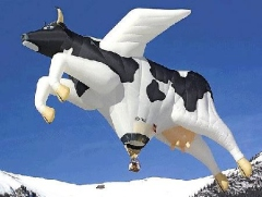 Cow hot air balloon - cows can fly