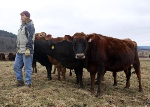 NY and PA dairy farmers considering selling their land for fracking - Image courtesy of Yahoo News