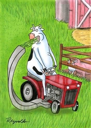 Funny cow cartoon on Pinterest