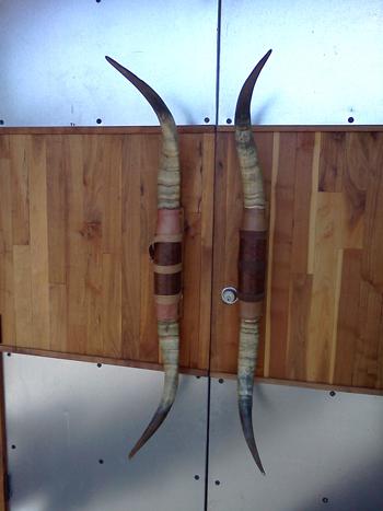 The front door of Gingham's restaurant - longhorns