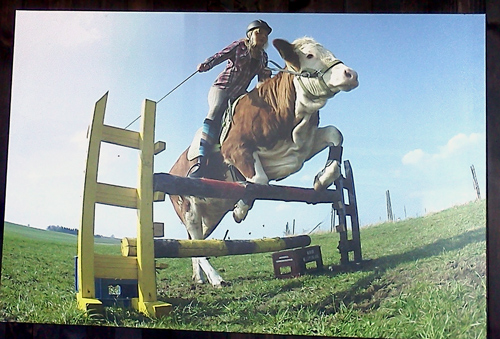 Canvas of Luna the jumping cow