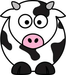 Cow Daily